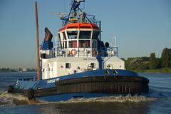 Fairplay III DST_4992 (larry_antwerp) Tags: fairplayiii antwerp towage tug antwerpen       port        belgium belgi          schip ship vessel        schelde        sleepboot      9365116