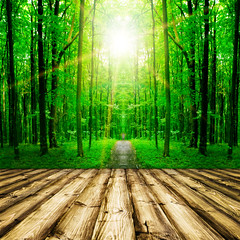 wood (lisame0511) Tags: natural nature tree background wood floor green white retro home path beam shine ray sun forest indoor pattern sunlight leaves table foliage park parquet brown blank light fence plank building season tabl wall panel frame texture desk architecture interior text empty picture trunk art yard wooden board single textured leafy ukraine