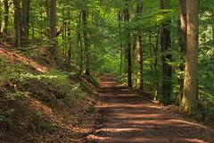 Forest of Neckarsteinach (stanzebla) Tags: forest neckarsteinach wald wlder fort bois wood