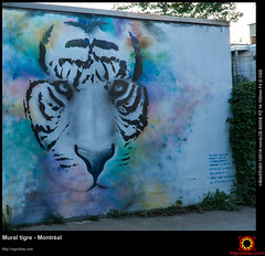 Mural tigre - Montral (Mario Groleau | mgroleau.com) Tags: camera:model=ilce6000 camera:make=sony exif:lens=epz18105mmf4goss exif:make=sony exif:focallength=18mm exif:aperture=50 geolocation exif:model=ilce6000 exif:isospeed=100 mariogroleau troisrivieres quebec canada mgroleaucom