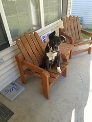2016-09-10_05-25-00 (tomcomjr) Tags: samsung motorola galaxy s7 lexi dog female chair frontporch black sitting laying