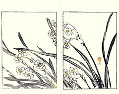 Bunchflower daffodil (Japanese Flower and Bird Art) Tags: flower bunchflower daffodil narcissus tazetta amaryllidaceae buncho tani nanga woodblock picture book japan japanese art readercollection