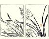 Bunchflower daffodil (Japanese Flower and Bird Art) Tags: flower bunchflower daffodil narcissus tazetta amaryllidaceae buncho tani nanga woodblock picture book japan japanese art readercollection