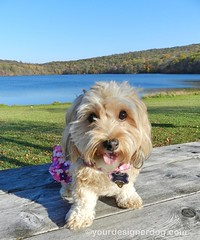 Autumn Adventures $1250 Giveaway  Ends 10/15 (yourdesignerdog) Tags: ifttt wordpress all posts contests giveaways adventures autumn blog cold contest cute designer dogs fall giveaway love pets