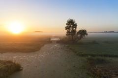 2016.09.09_DSC3570_Alphen aan den Rijn_zonsopkomst (rcbrug) Tags: sunrise holland nederland waterland tree boom fog grondmist mist sun canal meadows weides groundfog