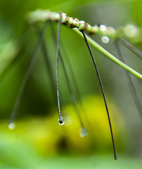 Droplet (Manu Holla Korya) Tags: water droplet green manuphotography manu nikond300s nikkor18200mmlens hollastudiophotography