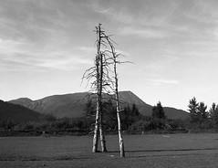 Girdwood, Alaska (cobbu2) Tags: bronica etr 75mm f28 mc zenzanon kodak 320txp txp