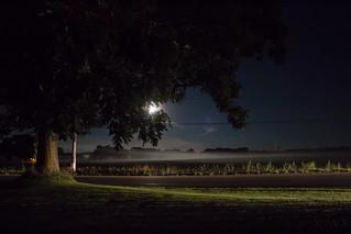 Early Morning, Moonlight and Oak Tree