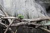 Nature (danimigliore) Tags: animal animals canon canon40mm 40mmpancake canon1200d 40mm davehill davehilleffect wood color nature naturephotography photography macrophotography animalphotography