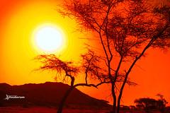 Goodbye Heat Waves (haidarism (Ahmed Alhaidari)) Tags: yellow red orange plant bokeh outdoor nature depthoffield sonya65 macro macrophotography sunrise sunset ngc create creation creative art artistic silhouette