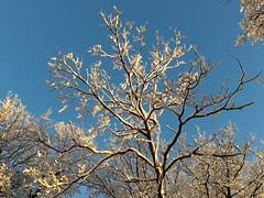 Winterwald an der Mörschieder Burr (AndreasHerbert) Tags: winter mörschied mörschiederburr