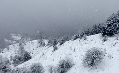 Snowing (elosoenpersona) Tags: mountain snow storm mountains nature forest nieve asturias bosque tormenta snowing montaña nevando elosoenpersona