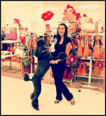 I want HER for Christmas! (Midnight and me) Tags: christmas shopping kiss dancing presents macys prettygirl standardpoodle blackpoodle ladieshandbags christmasatmacys blinkagain midnightandme macyslincolnroad