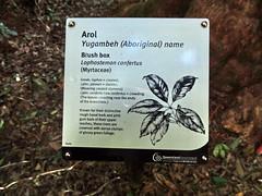 Flora, Lamington NP, Australia (Hesperia2007) Tags: plant sign leaf flora rainforest australia trail queensland botany subtropical habitat circuit lamingtonnationalpark boxtree bushbox mcphersonrange