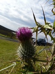 thistle and sky (gregwake) Tags: plants green grass rural countryside durham countydurham gbr weardale durhamdales
