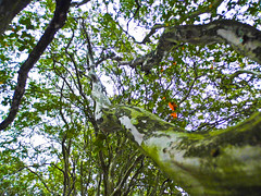 SANY0430.jpg (jaxx74) Tags: plants plant tree green nature leaves lines outdoors landscapes elkhart elkharttexas
