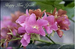 Happy New Year! (Aquamarine Images) Tags: happynewyear pinkflowers closeupflowers canonphotos flowersmacros bougainvilleasflowers aquamarineimages vinesbougainvilleas 2013photosofflowers