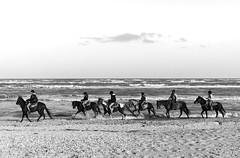 Senigallia (bura80) Tags: italien sea horses blackandwhite italy horse italia mare cavalli cavallo italie marche senigallia biancoenero ancona blancinegre schwarzundweiss blackwhitephotos