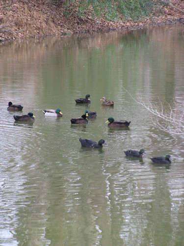 Getting all your ducks in a row!