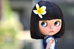 A beautiful flower....*Onni**