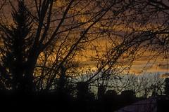 glory (zawaski) Tags: pink shadow orange colour tree robert sunrise portfolio canonefs1785mmf456isusm zawaski 2013 zawaski2013 2013zawaski 2014 2015 zawaski2015 robert