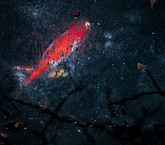 Carp Nebula