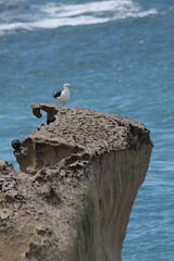 """""""You have the freedom to be yourself, your true self, here and now, and nothing can stand in your way"""". Richard Bach (Fred Zanagold) Tags: ocean newzealand bird beach canon eos seagull erosion otago dunedin otagopeninsula birdlife 1100d canoneos1100d"""