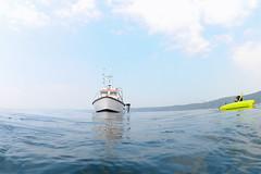 Plymouth-201605-29-CalmSea-PickUp (Tony J Gilbert) Tags: plymouth marine macro underwater diving nikond300 handdeeps jameseaganlayne hilseapointrocks scylla ceeking wwwdivingplymouthcom
