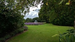 Into the beer garden at the Swettenham Arms (Eddie Crutchley) Tags: europe england cheshire swettenham outside pub garden nature trees lavender simplysuperb