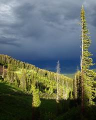 Teton Pass Thunderstorm (PaulBP) Tags: forest thunderstorm tetons jacksonhole wyoming