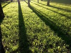 Evening . (presteza777) Tags: forest trees park grass evening summer       arboles alberi arbres  ombres sombra shadow erba hierba herbe