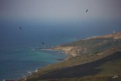 Migración de aves en el Estrecho de Gibraltar (mlorenzovilchez) Tags: nikond7200 tamron150600 migración migracióndeaves migration birdmigration estrechodegibraltar straitofgibraltar mar sea ngc cielo sky heaven aves águila raptors