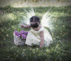 Come in una fiaba (Soloross) Tags: child bimba children faity mood fiaba flowers fiori stars stelle wings ali beauty bellezza sweetness dolcezza grass erba light luce