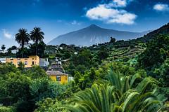 Icod de los Vinos view Teide (AndreLo2014) Tags: icod de los vinos teide teneriffa vulkan