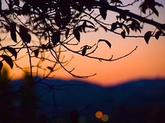 Sunset 20141006 (caligula1995) Tags: bokeh plumtree sunset