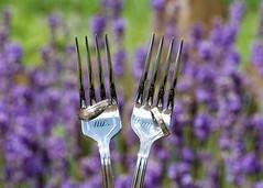 Me & You (Kerstin Warncke) Tags: wedding hochzeit hochzeitsfotografie lavendel ringe