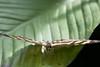 K46A8120 (Yvonne23021984) Tags: schmetterling butterfly hamm germany deutschland maxipark markro photography macrophotography canon canonphotography markofotografy canoneos7dmarkii insects insekten nature naturfotografie naturephotography closeup colorkey schmetterlinge butterflies