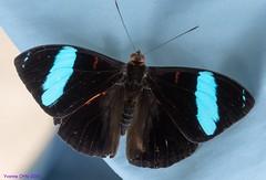 K46A8013 (Yvonne23021984) Tags: schmetterling butterfly hamm germany deutschland maxipark markro photography macrophotography canon canonphotography markofotografy canoneos7dmarkii insects insekten nature naturfotografie naturephotography closeup colorkey schmetterlinge butterflies