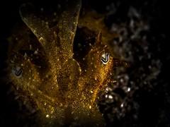 P8211326 (Jeannot Kuenzel) Tags: jeannotkuenzel jeannot kuenzel wwwjk4unet jk4u malta scuba under water underwater diving photography macro supermacro olympus epl5 zen port leica dg macroelmarit 45mm f28 asph ois inon z240 240z ucl165 s2000 moods aliensofthesea aliensofthedeepblue alien deep blue mediterranean sea maltaunderwater maltaunderwatermacro maltaunderwaterphotography bestmaltaunderwaterpictures maltamacro underwaterphotography maltascubadiving supermacrophotography underwatersupermacro underwateralien underwaterworld underwatercreature underwatermacro extrememacro superextrememacro