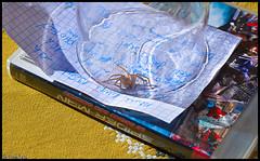 Arachnophobia 2 (Goulc'han) Tags: araigne photo peur victoire spiderman verre soleil papier nikon d600