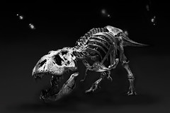 T-Rex (Wim van Bezouw) Tags: tyrannosaur black white animal blackbackground blackwhite bw