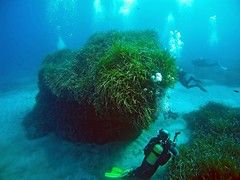 2016_0907_090846_002 (AAcero) Tags: buceo diving almera cabodegata isub