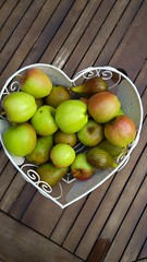 All from the Allotment (John the Scone) Tags: allotment produce harvest fruit apples pears figs