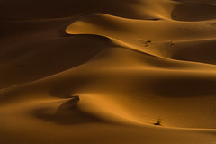 Sahara - Erg Chebaba (.sl.) Tags: sahara morroco desert sunset sand wind orange