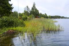 Skeppsmyran 15-16 august 2016 (Anders Sellin) Tags: 2016 skaten skeppsmyra skeppsmyran skrgrd sverige sweden archipelago baltic cliff frsta helgen lantstlle sea sommar sommarstlle stockholm summer water