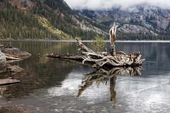 Jenny Lake (al-ICE g) Tags: grandtetonnationalpark jennylake wy
