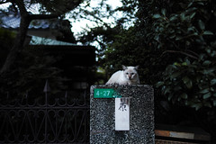 (ogizooo) Tags: sigma sdquattro sigma24mmf14art cat portrait streetsnap
