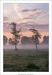 the two tree's. (Tom Baetens) Tags: 70300mm tombaetens belgium clouds d610 landscape light mist misty morning nikon outdoor sky sunlight sunrise tree view
