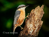 Nuthatch (Nigel Dell) Tags: autumn birds flickr seasons wildlife places hampshire fleet nuthatch ngdphotos