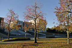 Autumn leaves (ogawa san) Tags: autumnleaves keiouniversity   shonanfujisawacampus